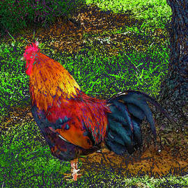 Mascot Rooster Azores by Bonnie Marie