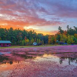 Massachusetts Cranberry Bog Harvest Equipment by Juergen Roth