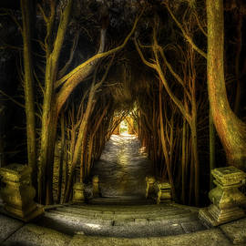 Mateus - Cypress tunnel from the top by Micah Offman