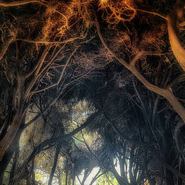 Mateus - Inside the Cypress tunnel  by Micah Offman