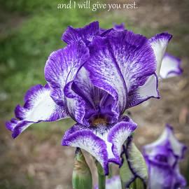 Matthew 11 Verse 28 by Robert Bales