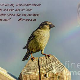 Matthew 6 - 26 by Gary Shindelbower