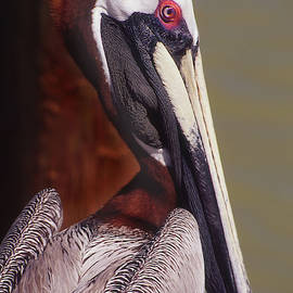 Mature Brown Pelican by Jerry Griffin