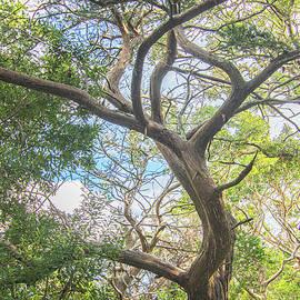 Mature Cedar Tree - Elliot Couse Nature Trail by Bob Decker