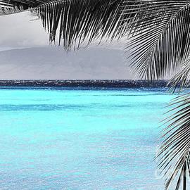 Maui Palms Black White Aqua Neon by Michele Hancock Photography