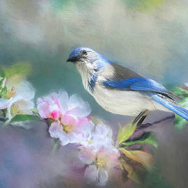 May Jay by Donna Kennedy