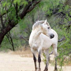 Meadow Horse by Barbara Sophia Travels