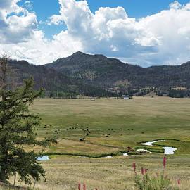 Meandering creek Montana by Randall Branham