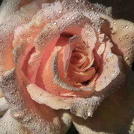 Medallion Rose by Donna Kennedy