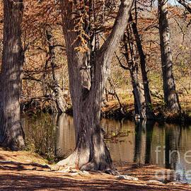 Medina River Fall Foliage by Bob Phillips
