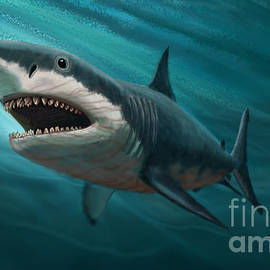 Megalodon by Gary F Richards