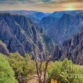 Mellow Yellow Black Canyon by Janice Pariza