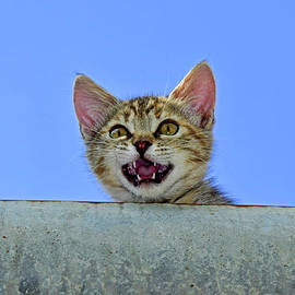 Meowing kitten in the gutter by Tibor Tivadar Kui