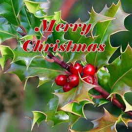 Merry Christmas Holly Berries by Marlin and Laura Hum