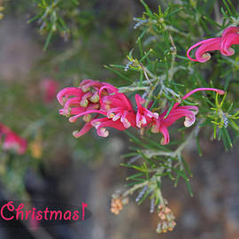 Merry Christmas with Aussie Natives by Maryse Jansen