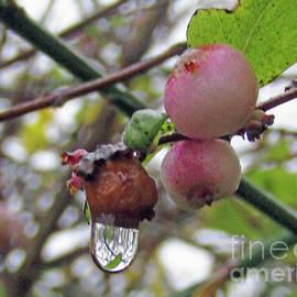 Merry Winter Berries by Kim Tran