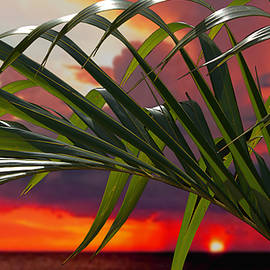 Miami sunset with palm by Jeff Burgess