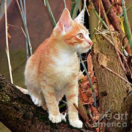 Mid-autumn assessment of a kitten by Tibor Tivadar Kui
