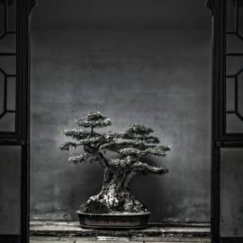 Midnight in Kyoto by Susan Maxwell Schmidt
