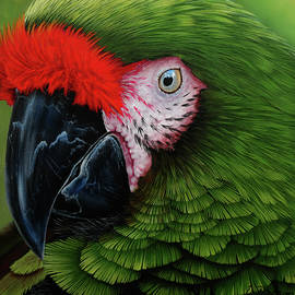 Military macaw 2 by Debra Dickson