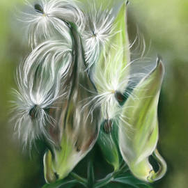 Milkweed Pods and Seeds by MM Anderson