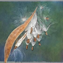Milkweed Seed Pod by Mary Lynn Giacomini