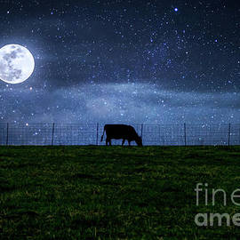 Milky Way Cattle Moonlight by Jennifer White