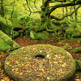Millstone at Padley Gorge, Peak District National Park, Derbyshire, England by Neale And Judith Clark