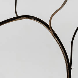 Minimalist branch by Martin Vorel Minimalist Photography