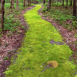 Minisink Battleground Park Trail  by Amelia Pearn