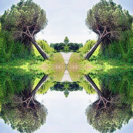 Mirror Inclined Pine Trees In  Surreal Scene by Flavio Vieri