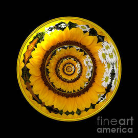 Mirrored Sunflower under glass 1 by Rose Santuci-Sofranko