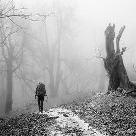 Misty Day by Ren Kuljovska