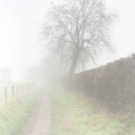 Misty Fence And Birds by Clive Beake