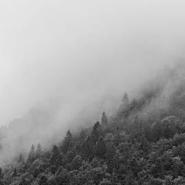 Misty forest by Martin Vorel Minimalist Photography