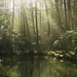 Misty Morning at Clarks Creek by Lori Deiter