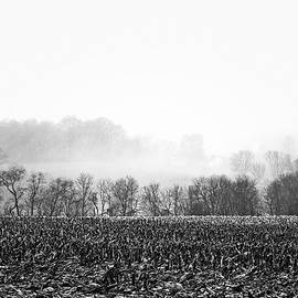 Misty Morning Farmland by Susan Maxwell Schmidt