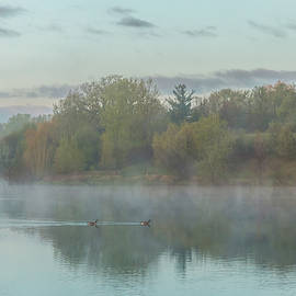 Misty Morning Geese by Patti Deters