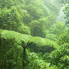Misty rainforest in Monteverde cloud forest reserve by Juhani Viitanen