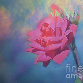 Misty Rose by Linda Cox
