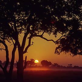 Misty Sunrise Hwange by MaryJane Sesto