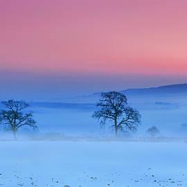 Misty trees along the B3362 Nr Tavistock, Devon, UK. by Maggie Mccall