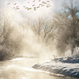 Misty Winter Scene by Judi Dressler