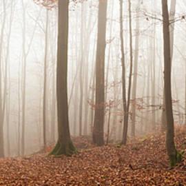 Misty Woodland Panorama by Tobias Luxberg