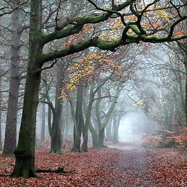 Misty Woods by Shirley Mitchell