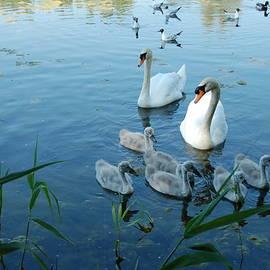 Moldon Hill Swan Family by Lynne Iddon