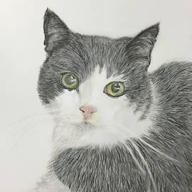 Molly by Linda Hardman