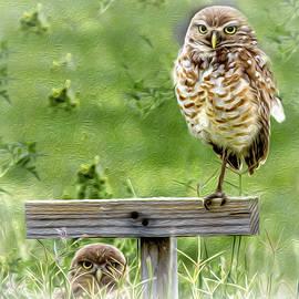 Mom and Owlet by Debra Kewley
