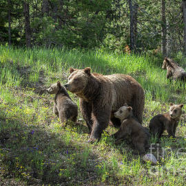 Mom and the Quads by Sandra Bronstein
