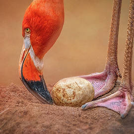 Mommy Flamingo Caring  by Steve Rich
